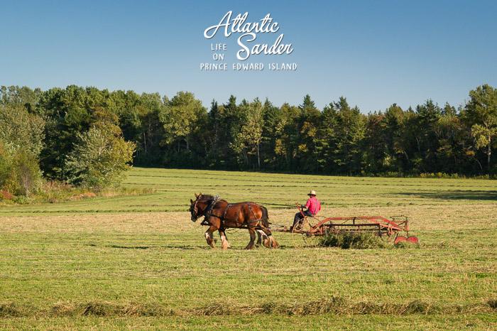 Amish farmer - Dundas