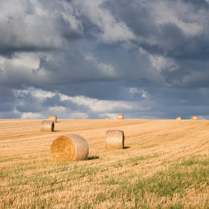 bales of hay - Kings County