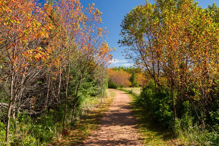 Fall colours on Tlaqatik Trail - Greenwich