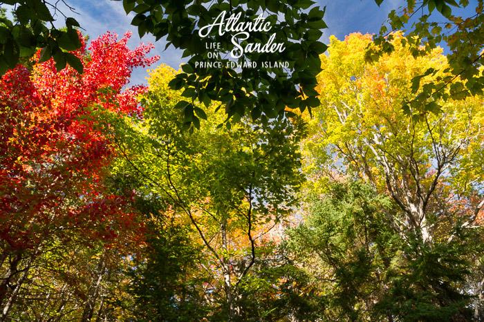 Fall colours - Klondyke Road